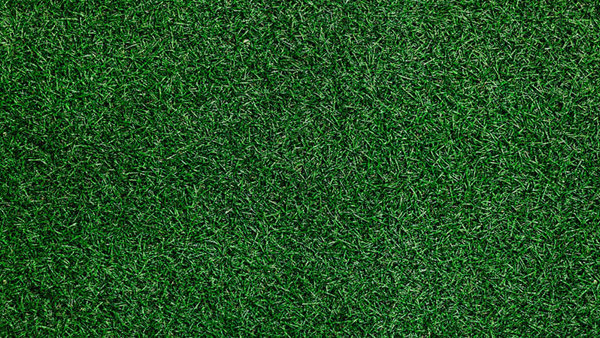 Image of green grass